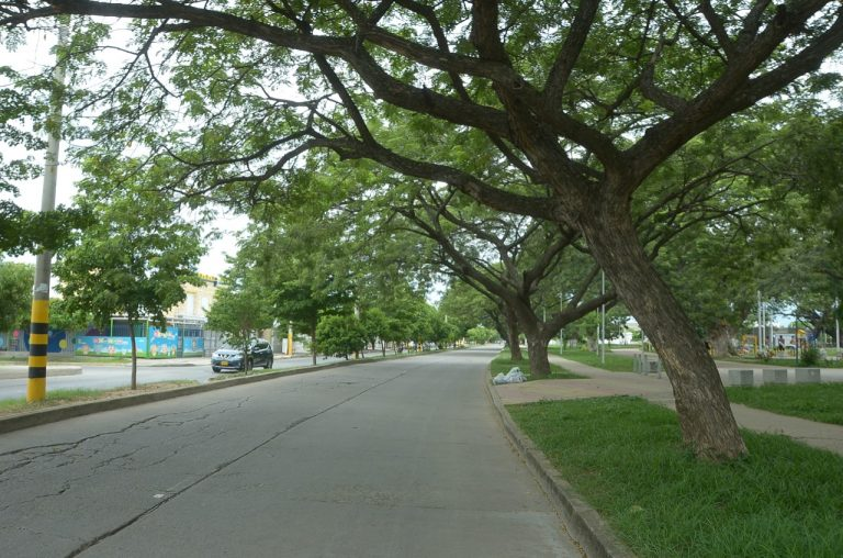 Árboles del Cesar recibirán control, vigilancia fitosanitaria e intervención