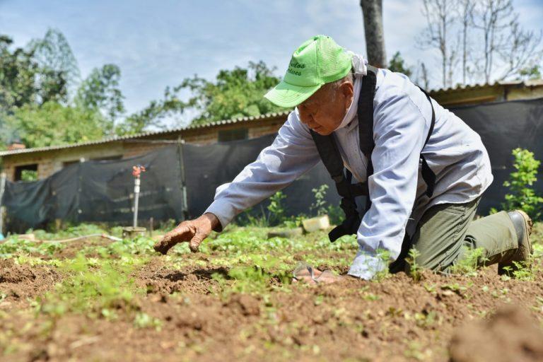 De la producción del Vivero Departamental  se sembró los primeros 2500 árboles