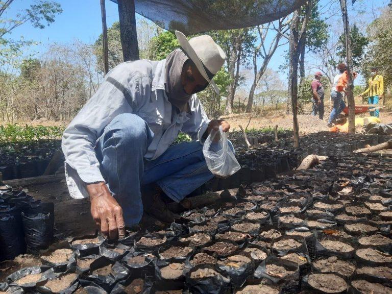 Corpocesar implementa proyecto de conservación del bosque seco tropical en la Serranía del Perijá