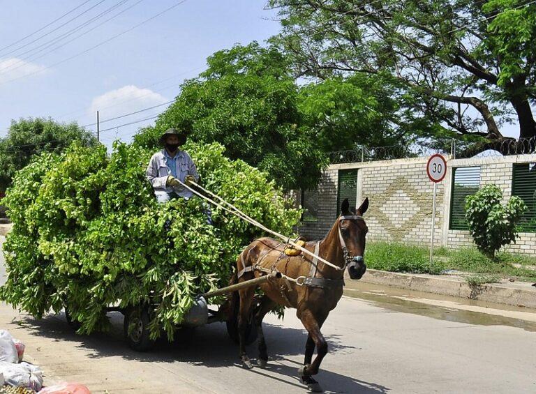 Concejo de Valledupar discutirá sobre situación de 'carromuleros' en el municipio