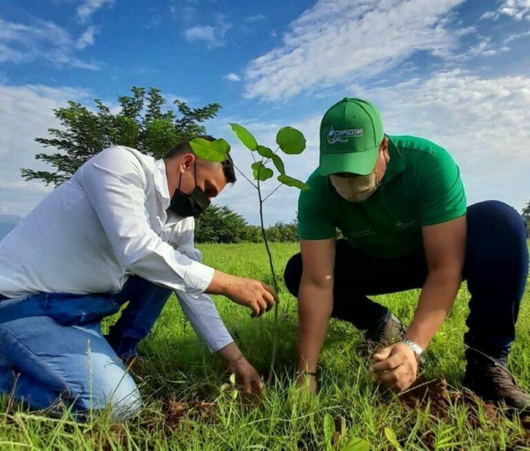 Más de 7 mil árboles fueron sembrados en el Cesar durante día mundial del árbol